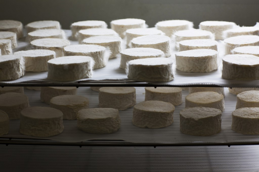 Cheesemaking 3
